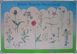 Serie - [Wilde flora]